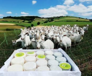 chèvres et rigottes - ferme de chasse nuage