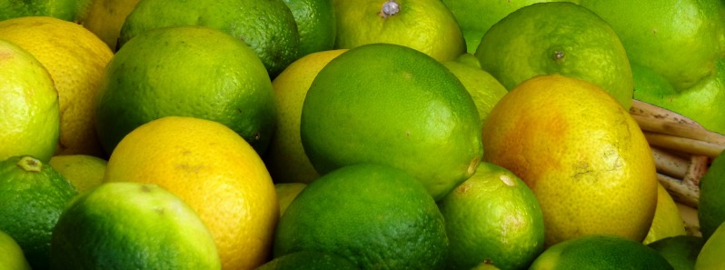 citrus-fruits-3923482_1920